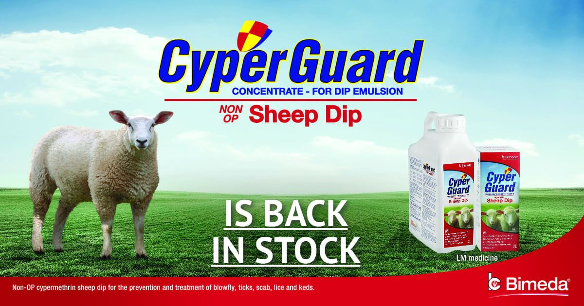Ireland's Only Non-OP Dip with A Tick Claim Is Back In Stock!
